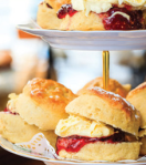 cream tea scones south hams